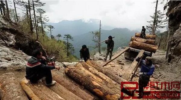 截至2017年1月终,全缅甸共计查获了非法走私木材40825吨