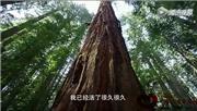 大自然在说话之《红木》