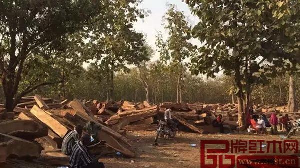 贝宁是刺猬紫檀和非洲亚花梨产地之一