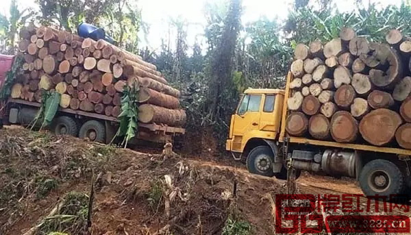 全缅将停止木材砍伐的消息,曾引起中国红木圈的关注