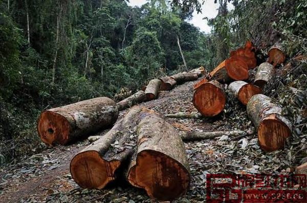 红木家具企业要协调好种与砍的关系,才能应对好市场各种变化
