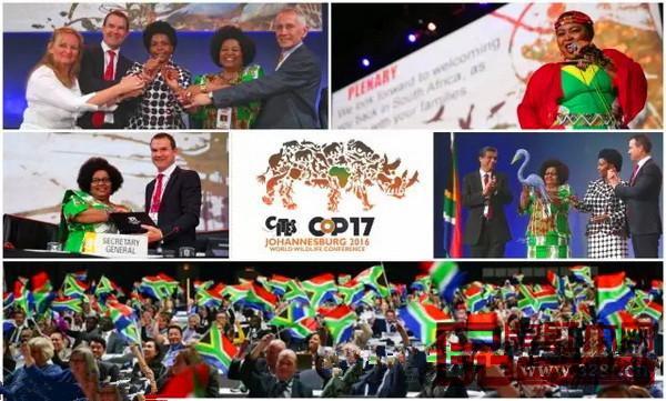 CITES大会上,不少木种被列入濒危管制