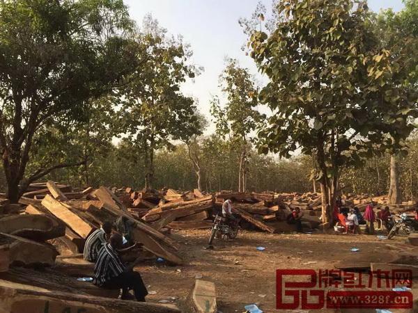 木材市场的大量需求使尼日利亚的森林覆盖率不断下滑