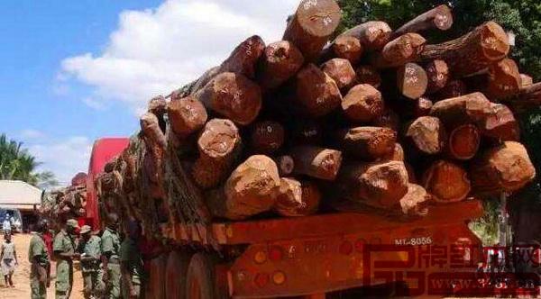 去年年底,莫桑比克宣布2017年开始全面禁止伐木