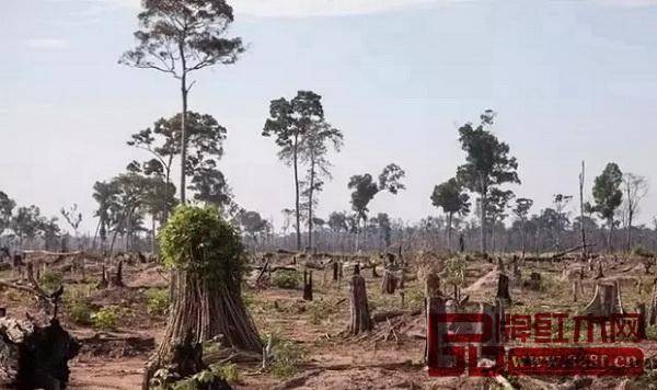 树木的减少最终会破坏生态平衡