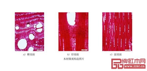 《红木》国标中缅甸花梨微观构造照片(从左到右依次为横切面、径切面、弦切面)