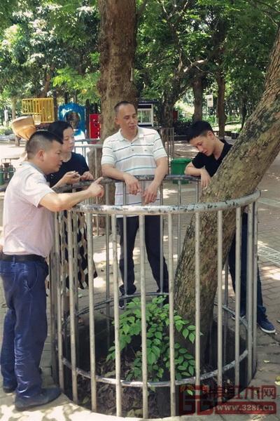 区氏臻品团队与当地行家共同研究海南黄花梨树的生长情况