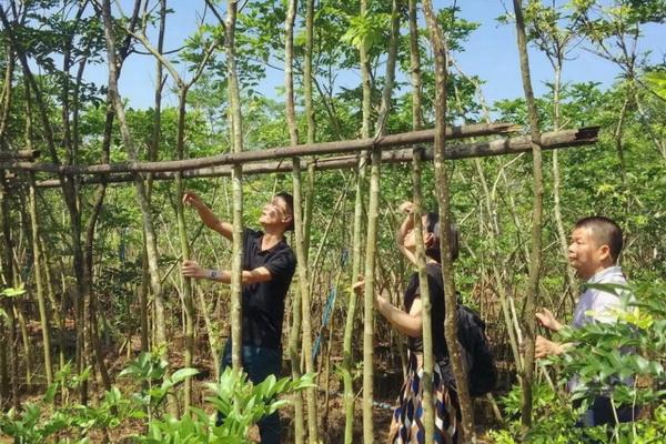 2018年5月,区氏臻品团队深入海南,拜访了当地多位黄花梨行家,共同探讨海黄存量、开料等,并深入走访了龙泉镇花梨街。