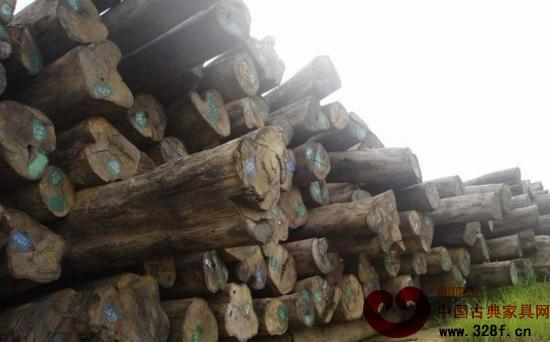 鸟足紫檀木材