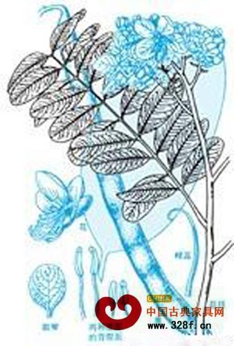 铁刀木种子