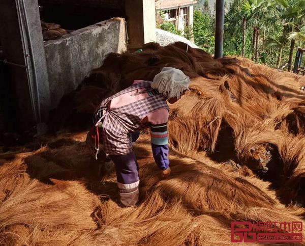 宫派全山棕床垫原料来自生长在海拔2000米以上的云贵高原的山棕树片提取的植物纤维