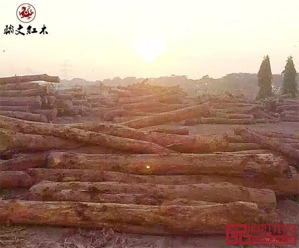 翰文红木在爪哇岛的黑酸枝料场