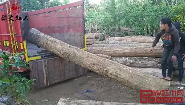 翰文红木黑酸枝家具原料来自爪哇岛
