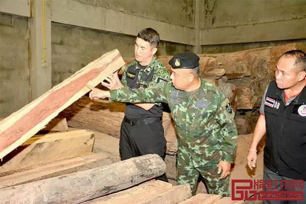 泰国森林官员、警员在北榄府地方行政工作人员陪同下,查验这批非法砍伐的原木和加工板枋(图片来源:《曼谷邮报》)