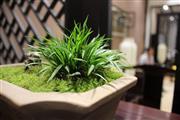 绿植生生不息 赋予红木展厅生命力