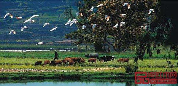 """风水可以说是""""人与自然和谐相处""""的最佳实践"""