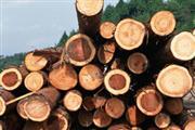 11月末红木材种价格一览