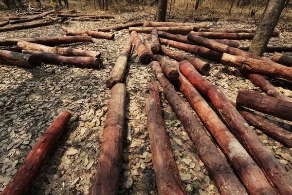 血檀或将列入CITES公约管制?赞比亚有限放行库存