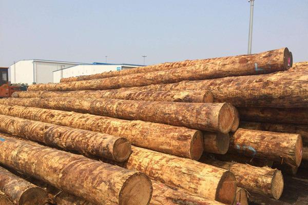 许美琪:中美贸易摩擦下,美国硬木对华出口前景几何?