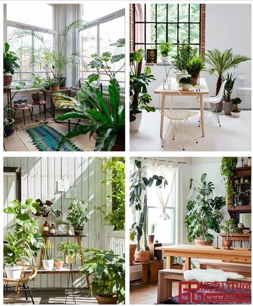 在入门玄关处或是过道、角落打造入户花园,使住宅充满生机
