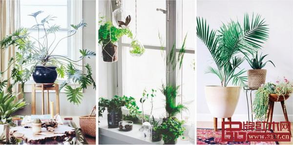 选择喜阴的植物,交叉错落摆放在家居环境中,在打理植物的同时也更加亲近自然