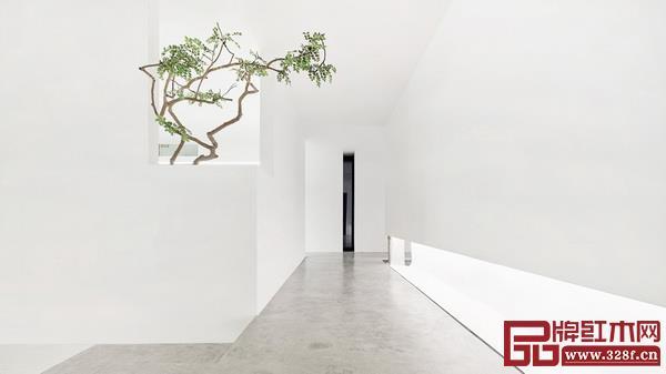 设计空间的留白,绿植的存在更显空旷与天地宽广