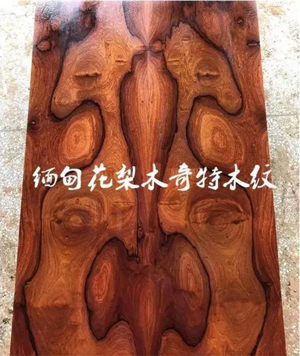 缅甸花梨——具升值潜力的木材