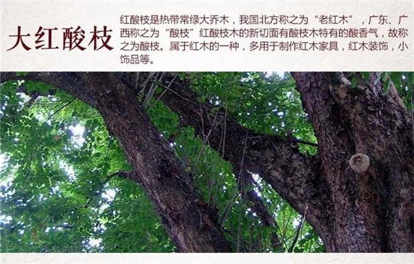 """大红酸枝为什么被叫做""""老红木""""?"""