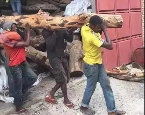 """""""赞比亚紫檀""""已然成为红木市场的一匹黑马!"""
