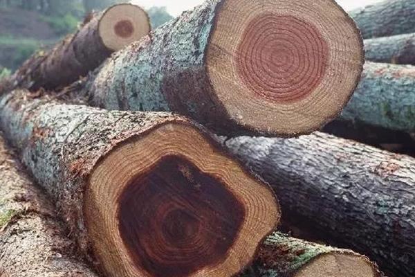 国标二十九种红木——伯利兹黄檀