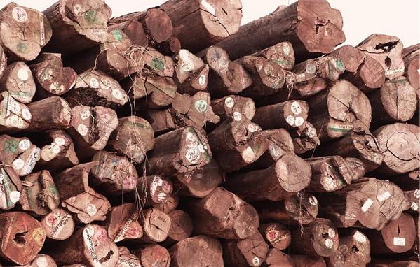 2019年国内缅甸花梨木最新价格:稳中有升