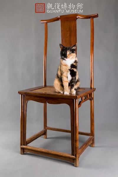 观复猫韩昏晓与黄花梨灯挂椅