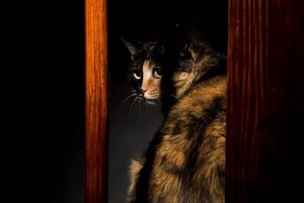 马未都以诗会友:黄花梨灯挂椅与观复猫擦出怎样的火花?
