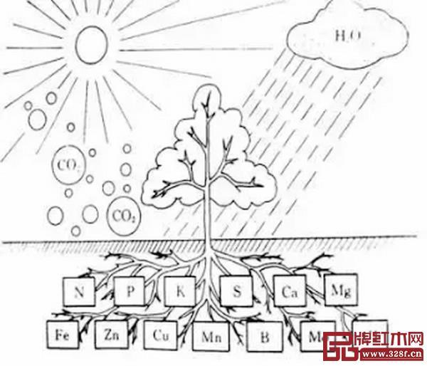 图1_ 树木生长机制