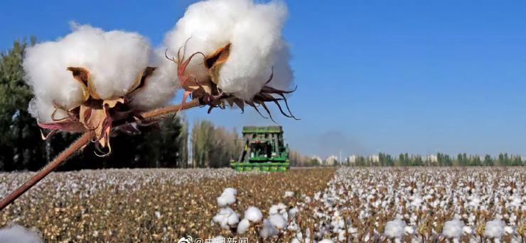 一周红木天下事:HM抵制新疆棉花的背后,国货品牌已经崛起!|第158期