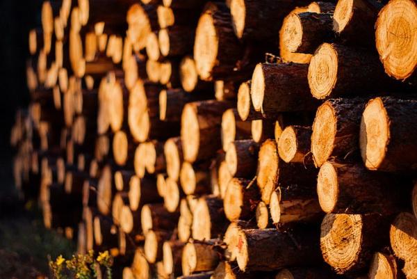 一周红木天下事:国内木材供不应求,疯狂涨价|第160期